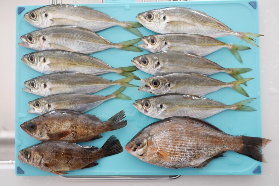 大黒海釣り施設でアジ&メバル&ウミタナゴ