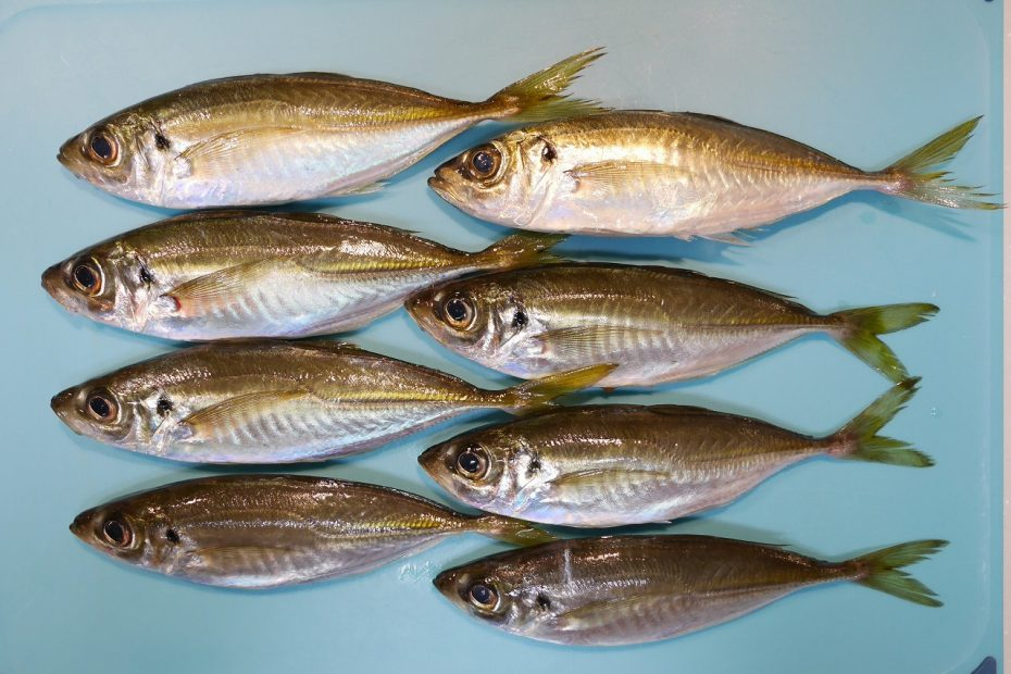 大黒海釣り施設でアジ釣り